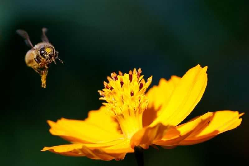 Dampak Perubahan Iklim, Peternak Lebah Prancis Perkirakan Panen Madu Terburuk