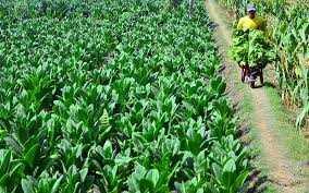 DBH CHT Mesti Bantu Petani dan Buruh