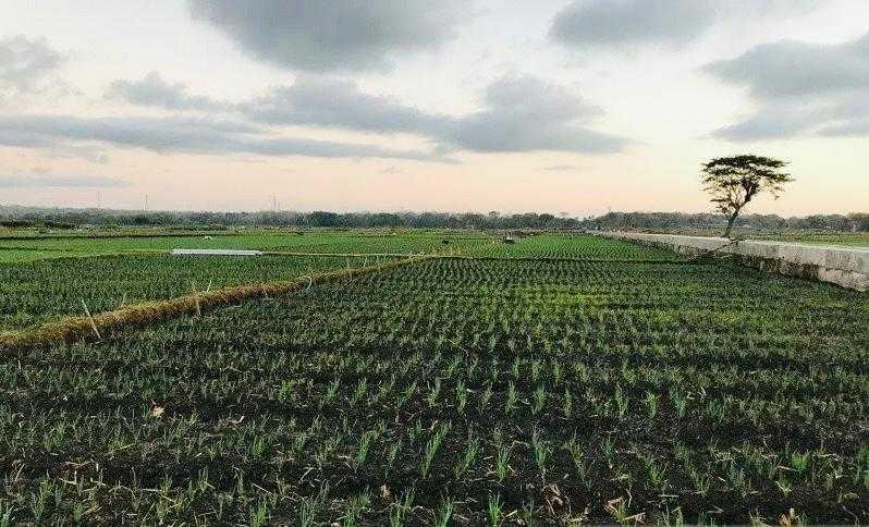 Dukung Cetak Sawah di DIY, Pemerintah Pusat Diminta Bangun Embung di Kulon Progo