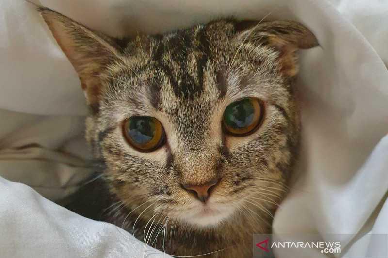 Gawat, Dua Kucing Positif Covid-19