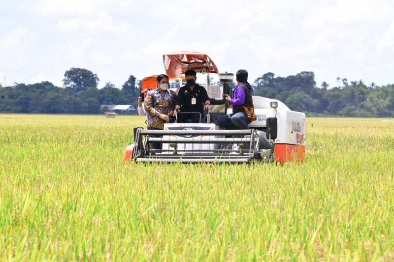 Jangan Impor Beras, Persawahan di Sulsel 21.950 Hektare Telah Panen Per Maret