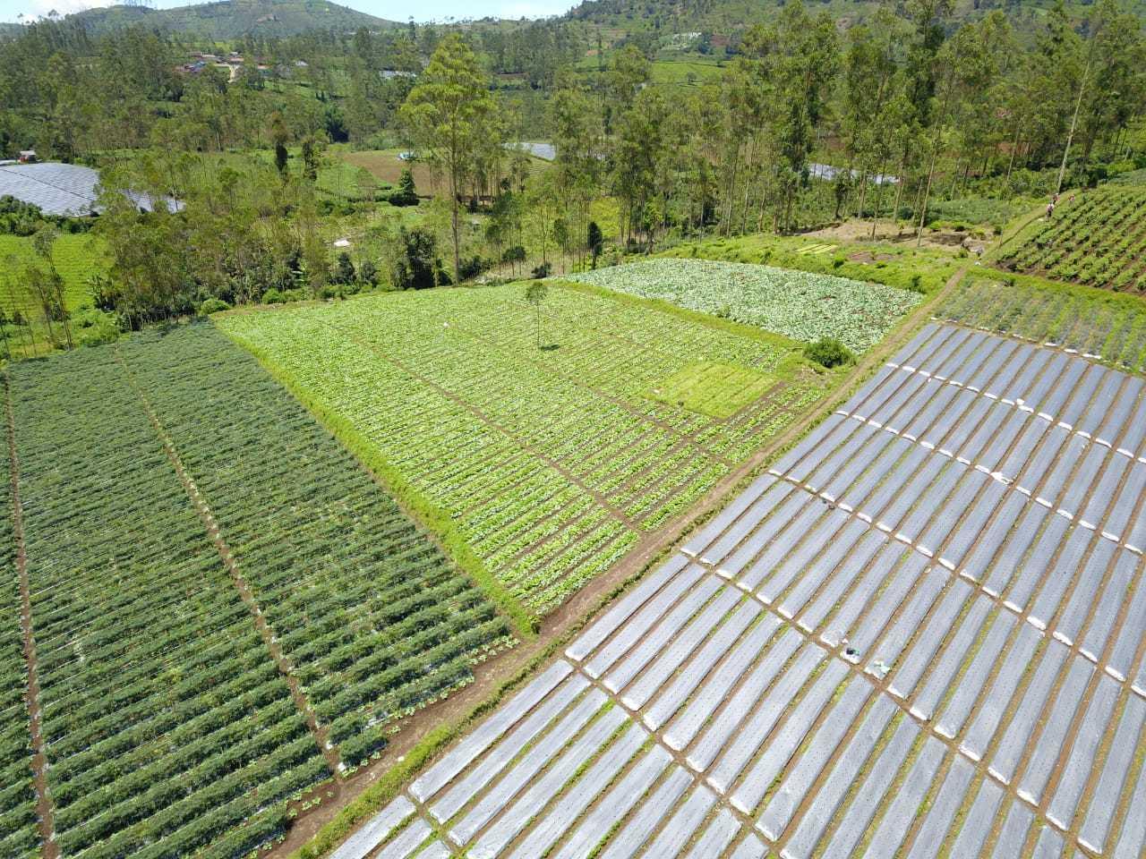 Kementan Bangun 2.358 Kampung Holtikultura pada 2022