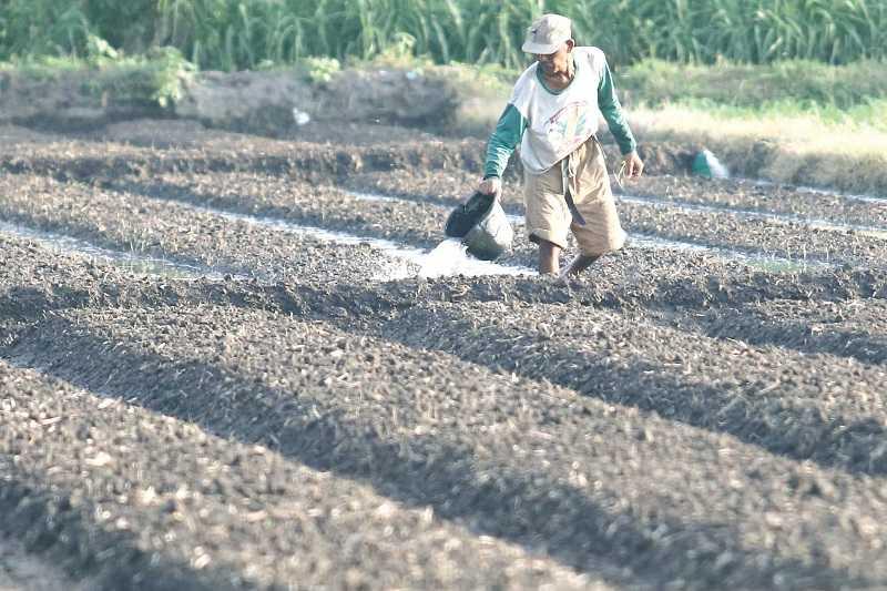 Nilai Tukar Petani Makin Mengkhawatirkan