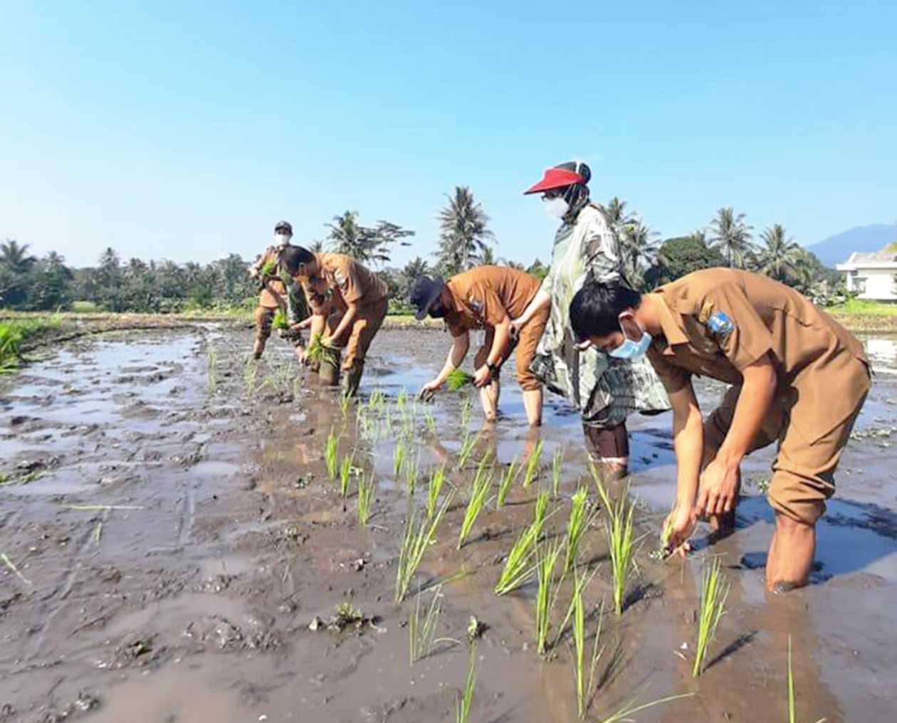 Pemprov Banten Targetkan 37 Hektar untuk Musim Tanam Ketiga