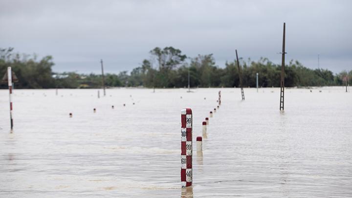 Penyakit Whitmore Langka Melonjak di Vietnam Selama Musim Banjir