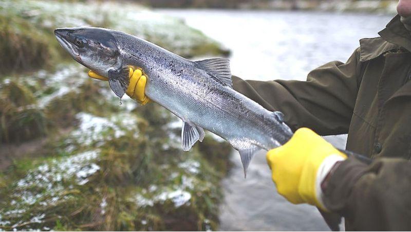 Populasi Ikan Air Tawar di Dunia Terancam Punah