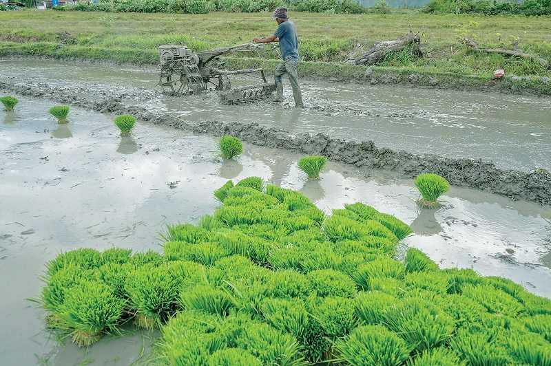 Selama Korupsi Impor Pangan Berjalan, Mustahil RI bisa Membangun Pertanian Mandiri