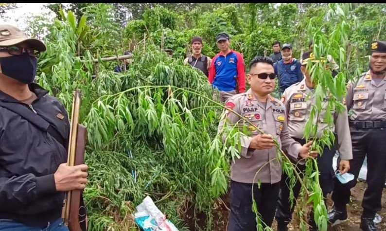 Sungguh Mengenaskan, Oknum Guru Ditangkap Polisi karena Tanam Ratusan Pohon Ganja