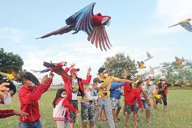 Terbangkan Burung Macaw